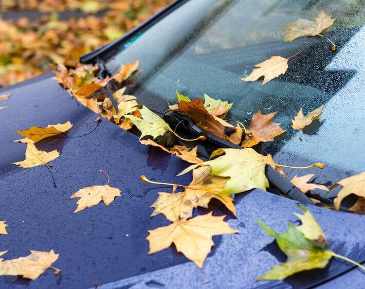 Hood of blue car covered in autumn foliage and light mist