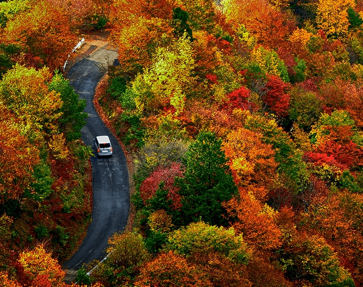 Best Scenic Drives for Fall Color