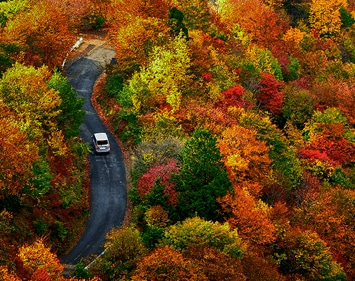 Car driving on a winding road through fall-colored trees