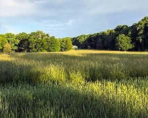 Grassy field at sunset