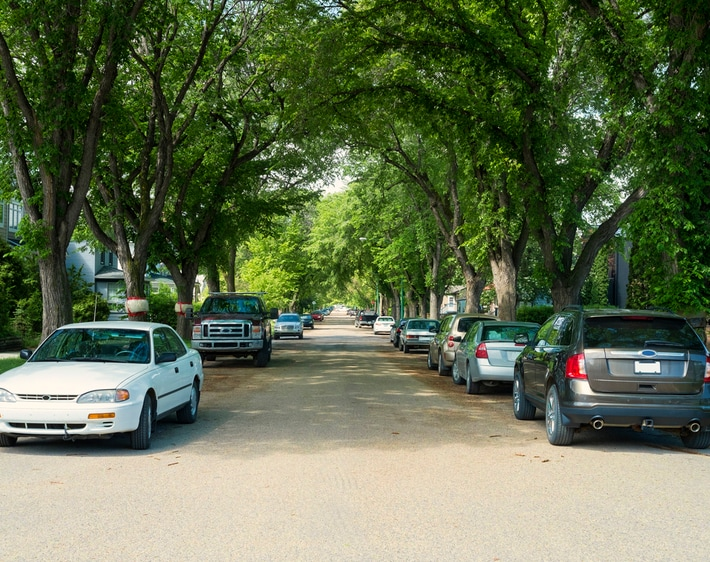 elm-lined street with cars parked outside